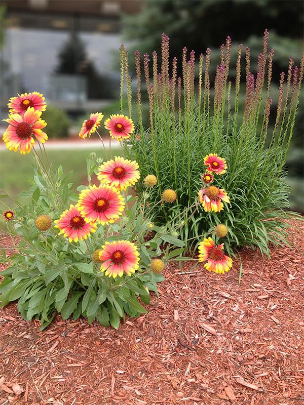 IMG_0865-flowers